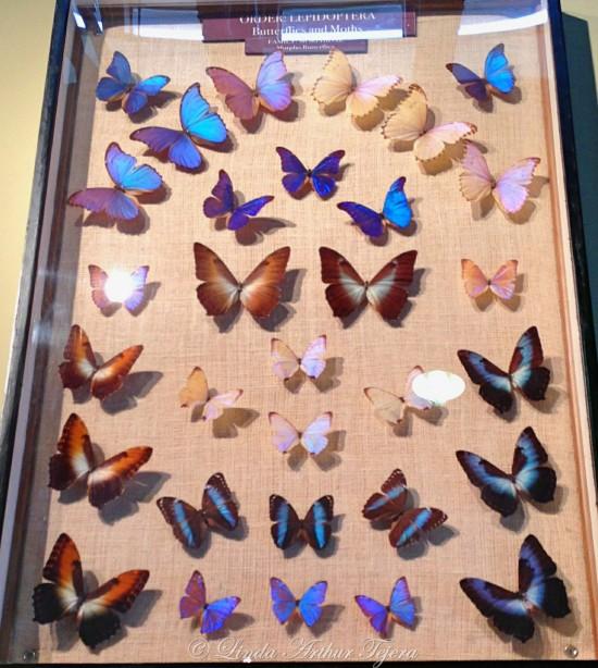 Butterflies_Fotor