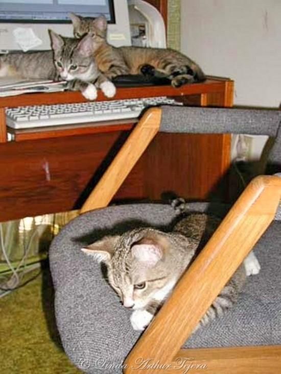 10-10-02 kittens_Fotor