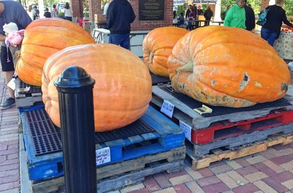 Pumpkins_Fotor
